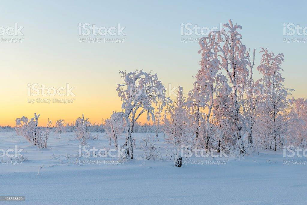 Winter sunset in the taiga, the Yamal Peninsula stock photo