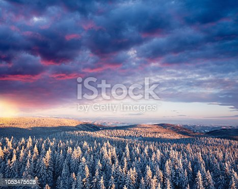 Idyllic winter scene with snowcapped trees at sunset. Aerial view.
