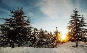 Winter, Snow, Sun, Sunset, Forest