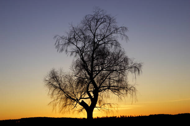 Vinter Solnedgång bildbanksfoto