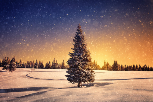 Winter landscape: snow storm at the sunset.