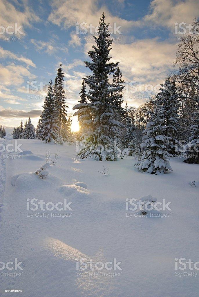 Winter sunset scene royalty-free stock photo