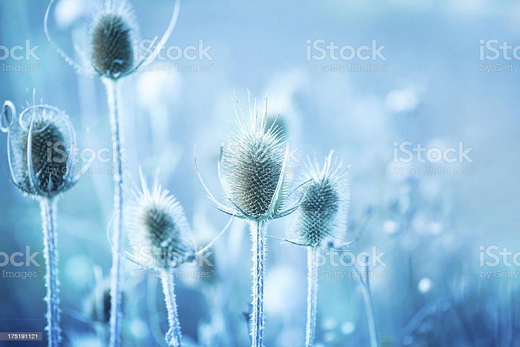Winter thistle stock photo