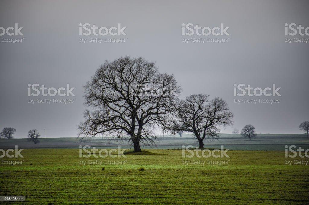 Image de paysage de temps hivernale d'arbre ou champ vert, pré avec arborescence au moment de l'hiver. Ciel nuageux. Nature de l'Azerbaïdjan. Caucase - Photo de Agriculture libre de droits