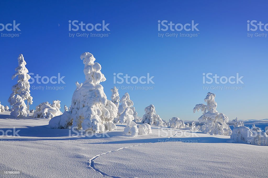 Winter, tracks in snow covered landscape royalty-free stock photo