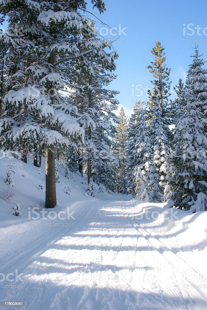Winter Trail royalty-free stock photo