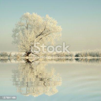 1034754000 istock photo Winter tree at dawn 137991166
