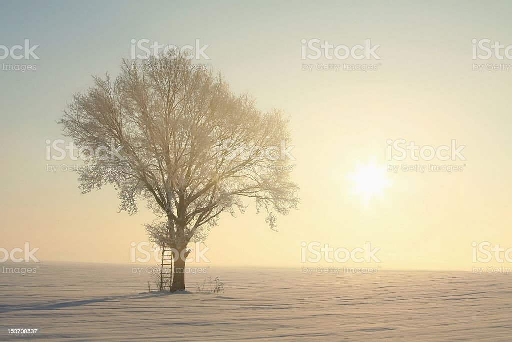 Winter tree at dawn royalty-free stock photo