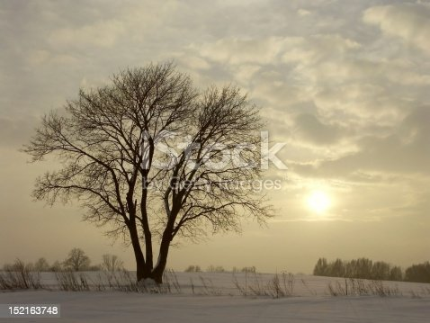 1034754000 istock photo Winter tree at dusk 152163748
