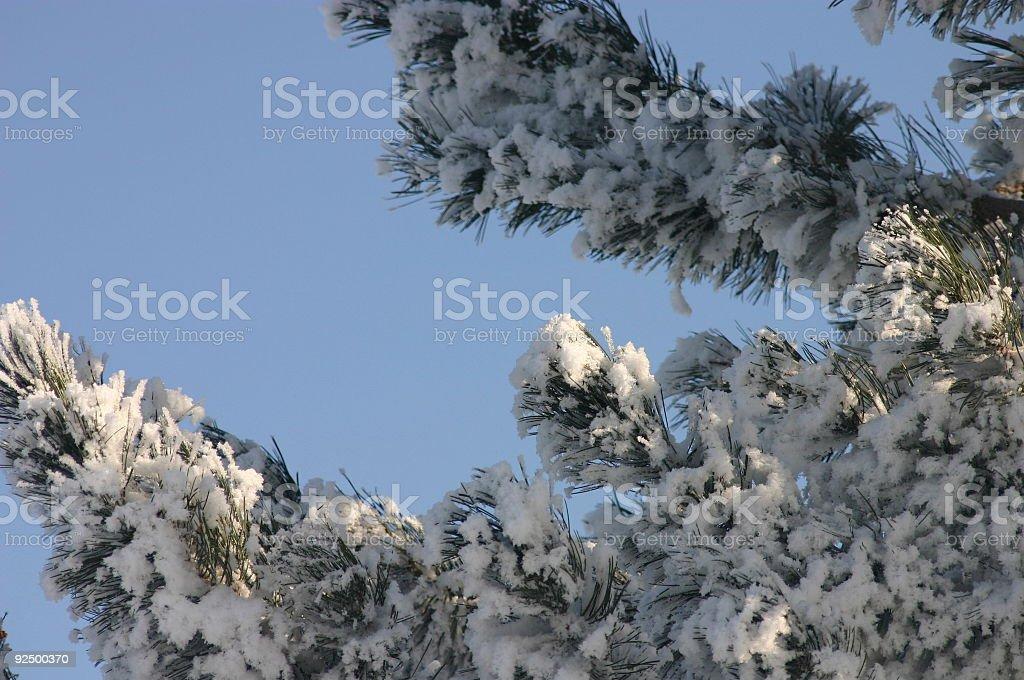Winter Tree Close up royalty-free stock photo