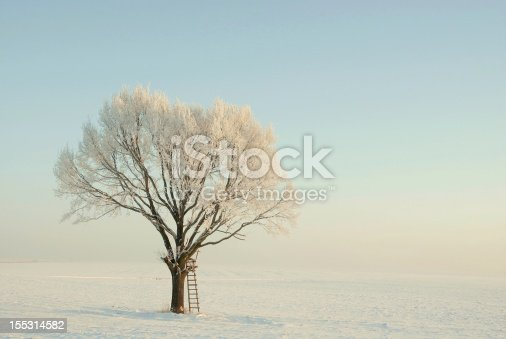 1034754000 istock photo Winter tree covered with frost at sunrise 155314582