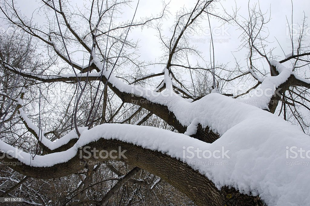 Winter tree  covered with snow in park 2 royalty-free stock photo