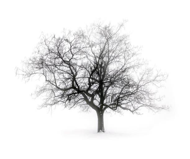 Winter Baum im Nebel – Foto