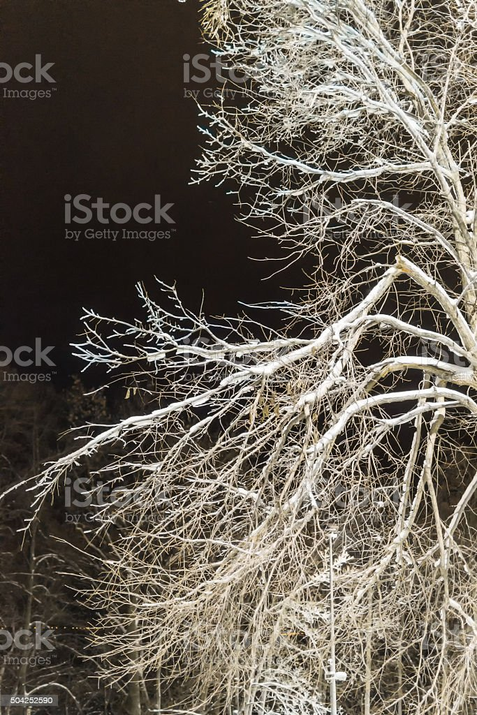 Winter Tree in Snow at Night stock photo