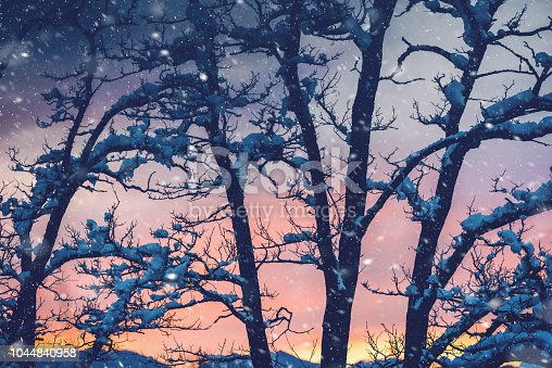 Amazing winter sunset over bare tree, covered in snow