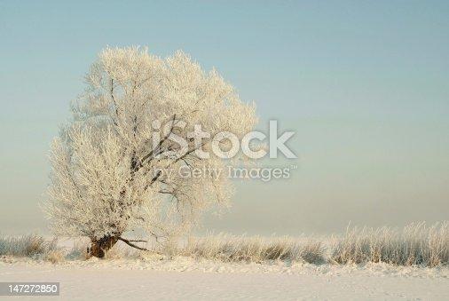 1034754000 istock photo Winter tree 147272850