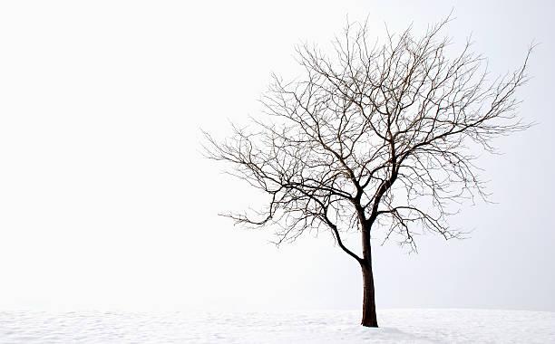 Arbre d'hiver - Photo