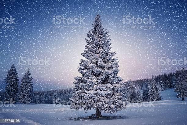 Winter tree picture id157740196?b=1&k=6&m=157740196&s=612x612&h=ssdd254olzx qsw7um9drd7bggtqy07gqha dhztzzm=
