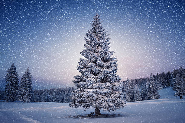 Winter Tree Idyllic winter scene: Pine tree covered with snow. fir tree stock pictures, royalty-free photos & images