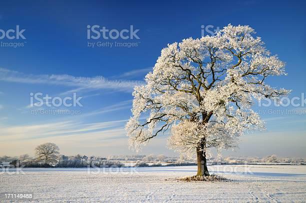 Winter tree picture id171149488?b=1&k=6&m=171149488&s=612x612&h=pjrtvr44a1f599s3qtsdkgagxaxnjbluxfnbt uifty=