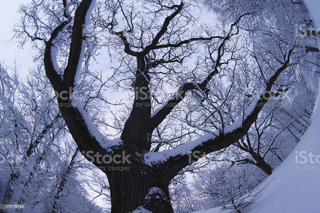 Winter Tree (fisheye) stock photo