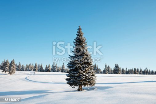 Winter landscape with lonely spruce tree in front. Early morning shot.