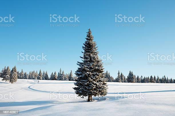Photo of Winter Tree