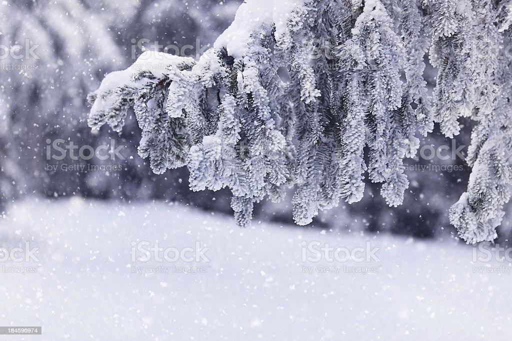 Árbol de invierno - foto de stock