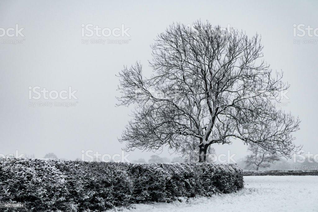 Winter Tree - Foto stock royalty-free di Albero