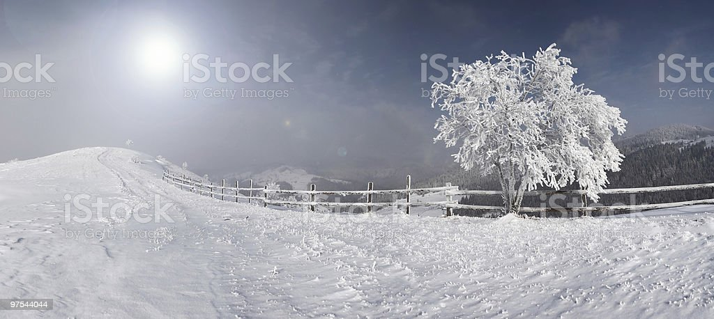 Arbre d'hiver photo libre de droits