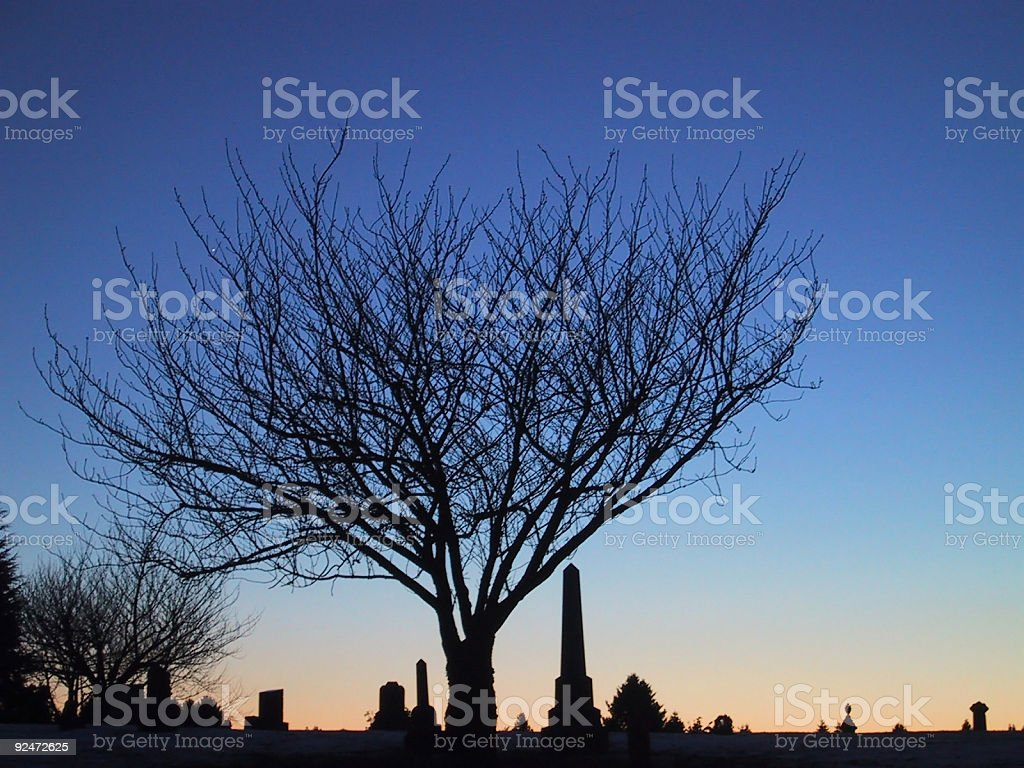Winter tree silhouette. royalty-free stock photo