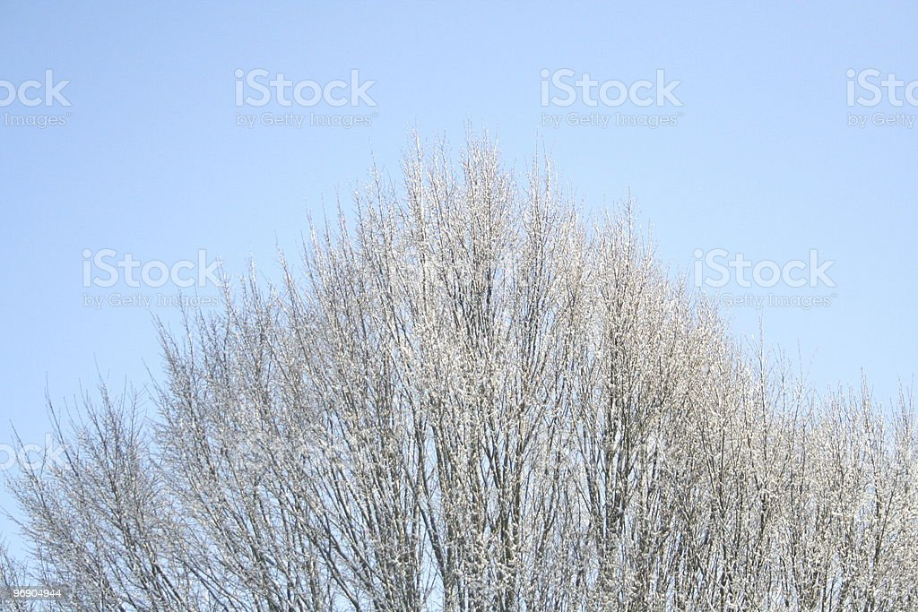Winter tree top royalty-free stock photo