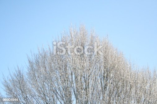 Winter Tree Top Stock Photo & More Pictures of Blue