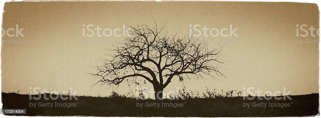 Winter Tree - Vintage Look Series royalty-free stock photo