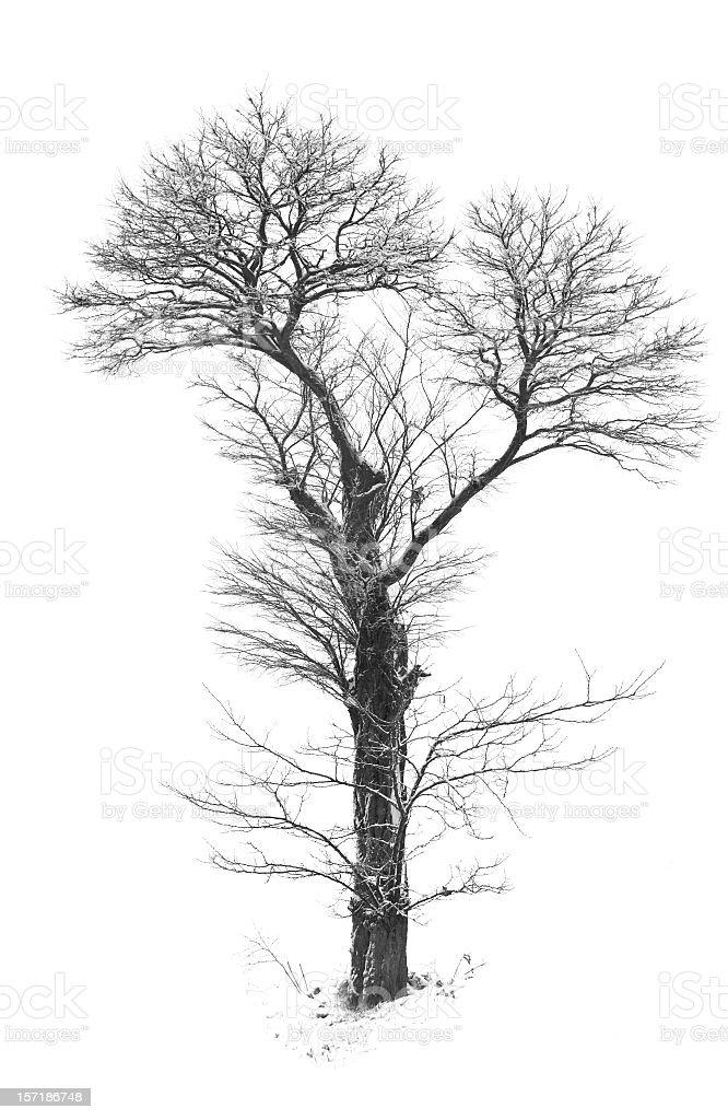 Winter tree whit snow royalty-free stock photo