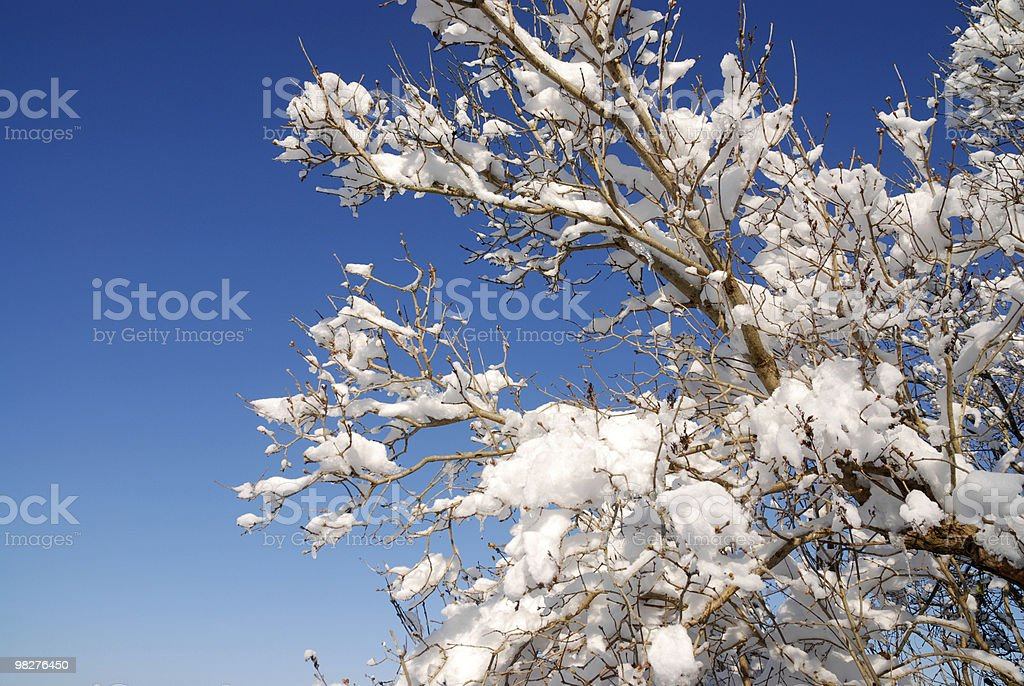 winter tree with snow against blue sky royalty-free stock photo