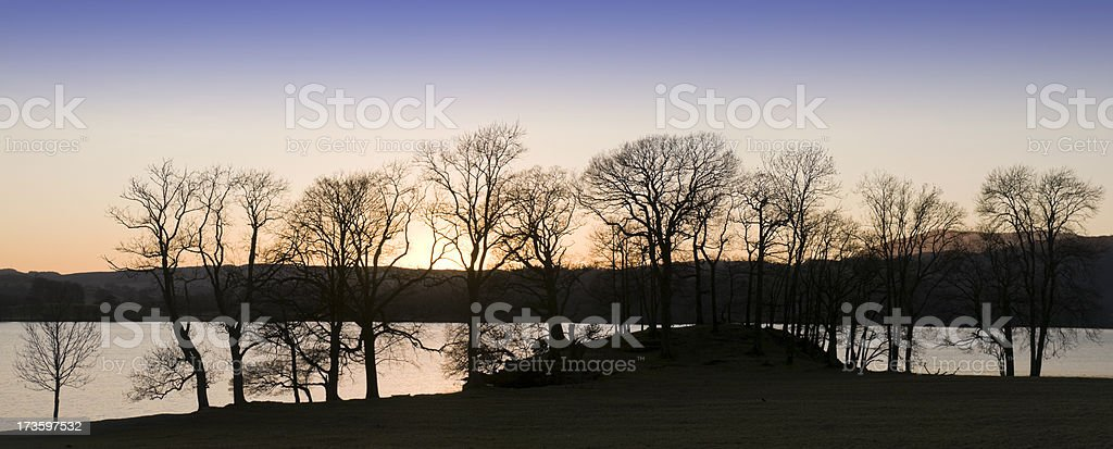 Winter Treeline - Panoramic royalty-free stock photo