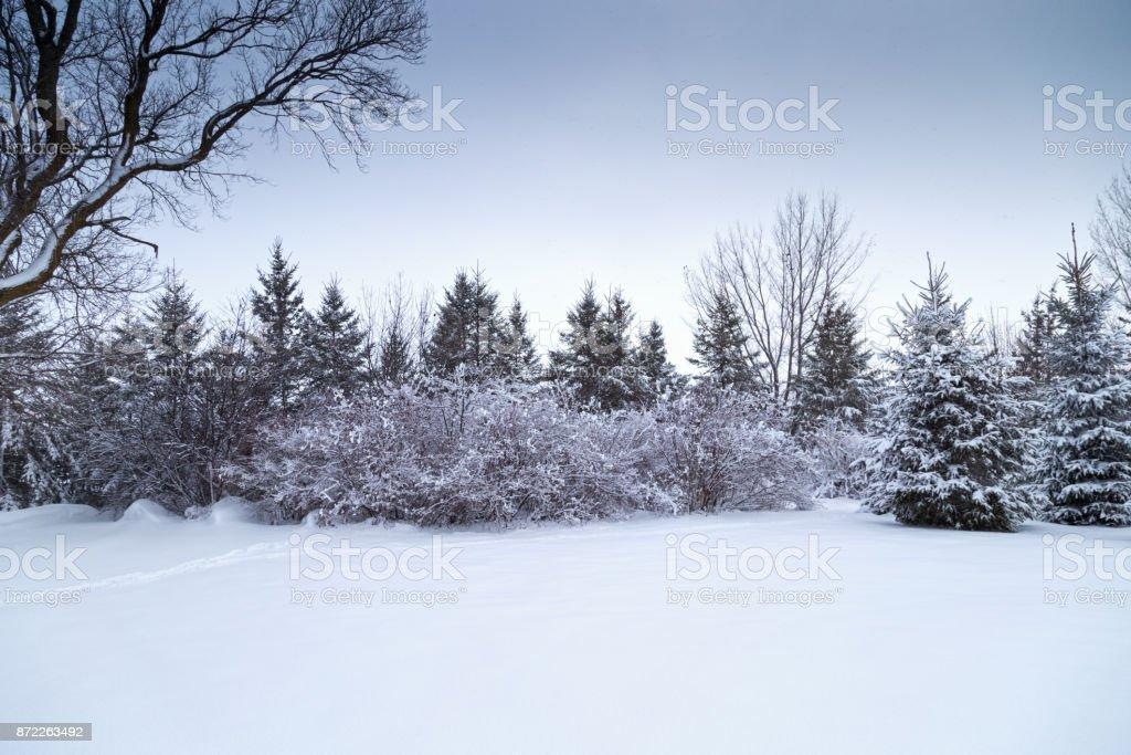 Arbustes et arbres d'hiver - Photo