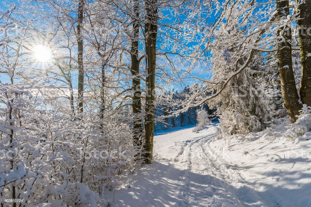 Winter trees and path in Beskid Sadecki Mountains with sun on blue sky, Poland stock photo