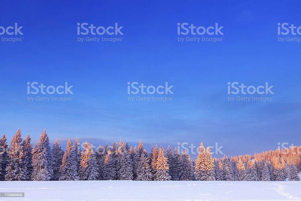 Winter Trees At Sunrise royalty-free stock photo