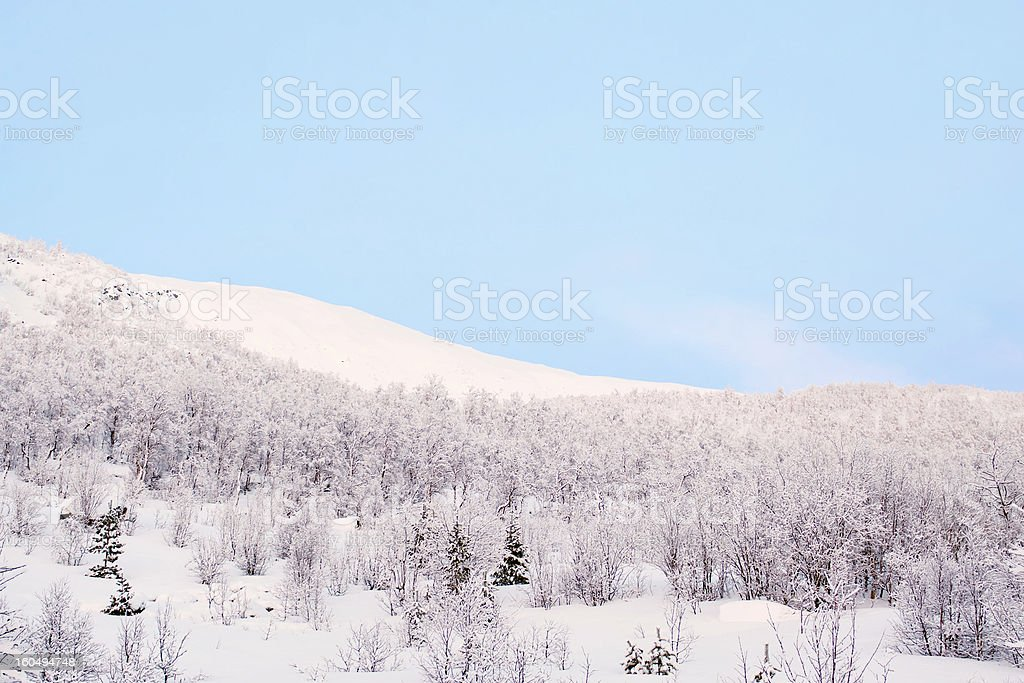 Winter trees at sunset royalty-free stock photo