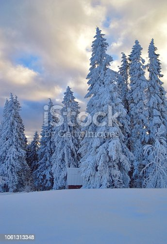 1034754000 istock photo Winter trees covered by snow at early evening, snowfield at foreground 1061313348
