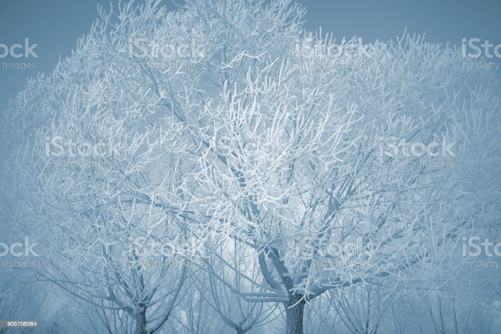 Winter trees covered with a thick layer of frost stock photo
