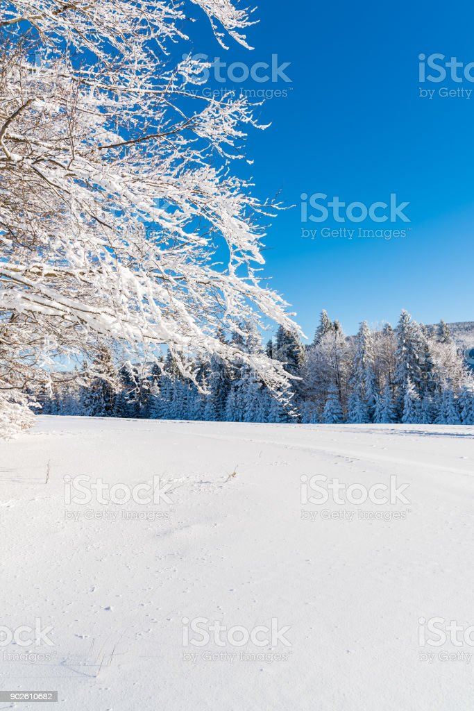 Winter trees covered with fresh snow in Beskid Sadecki Mountains, Poland stock photo