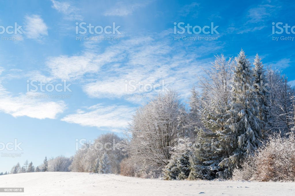 Winter trees in Beskid Sadecki Mountains and sunny blue sky, Poland stock photo