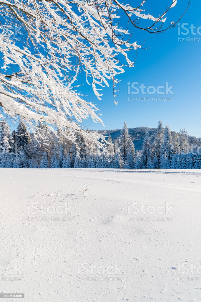 Winter trees in Beskid Sadecki Mountains covered with fresh now, Poland stock photo