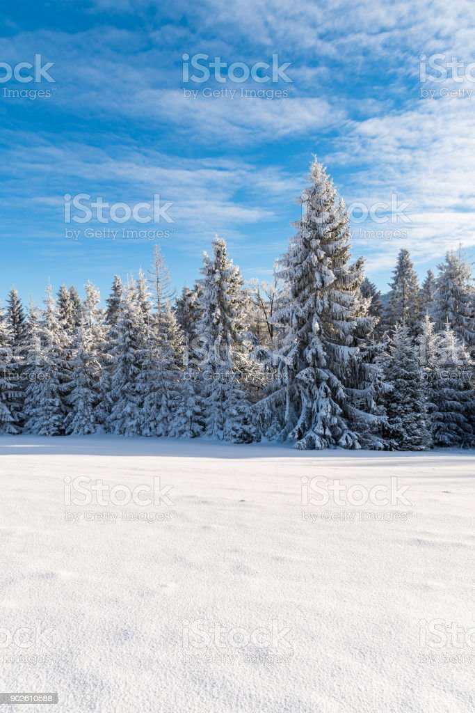 Winter trees in Beskid Sadecki Mountains covered with fresh snow, Poland stock photo