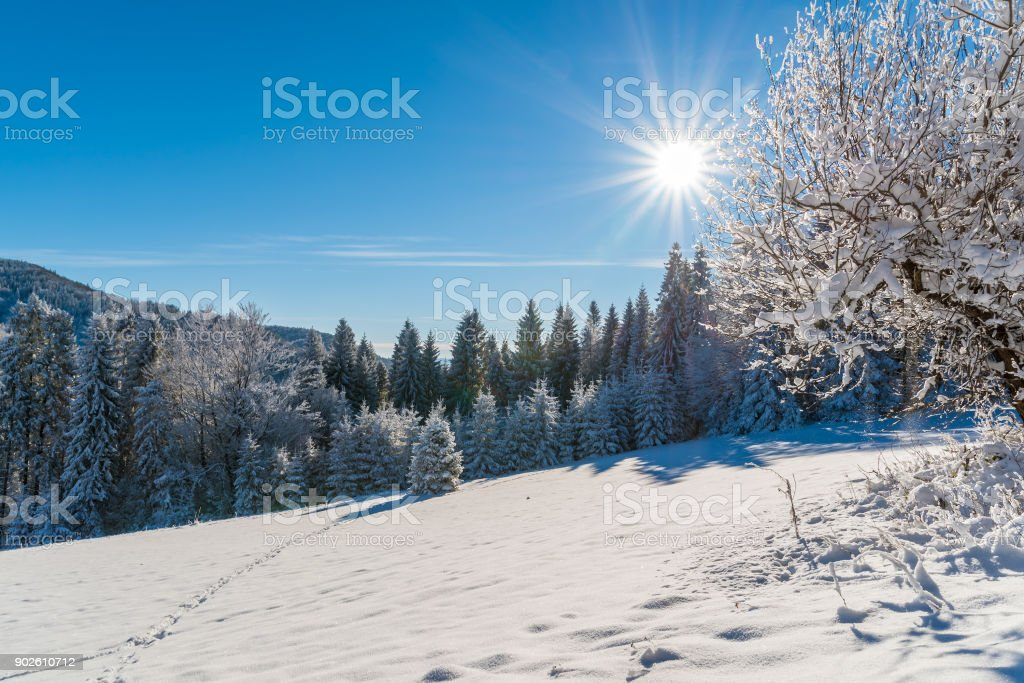 Winter trees in Beskid Sadecki Mountains with sun on blue sky, Poland stock photo