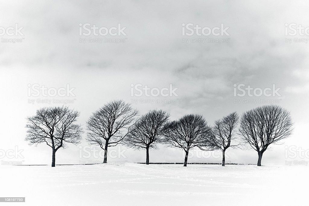 Alberi Invernali Nel Campo Di Neve Bianco E Nero Fotografie Stock