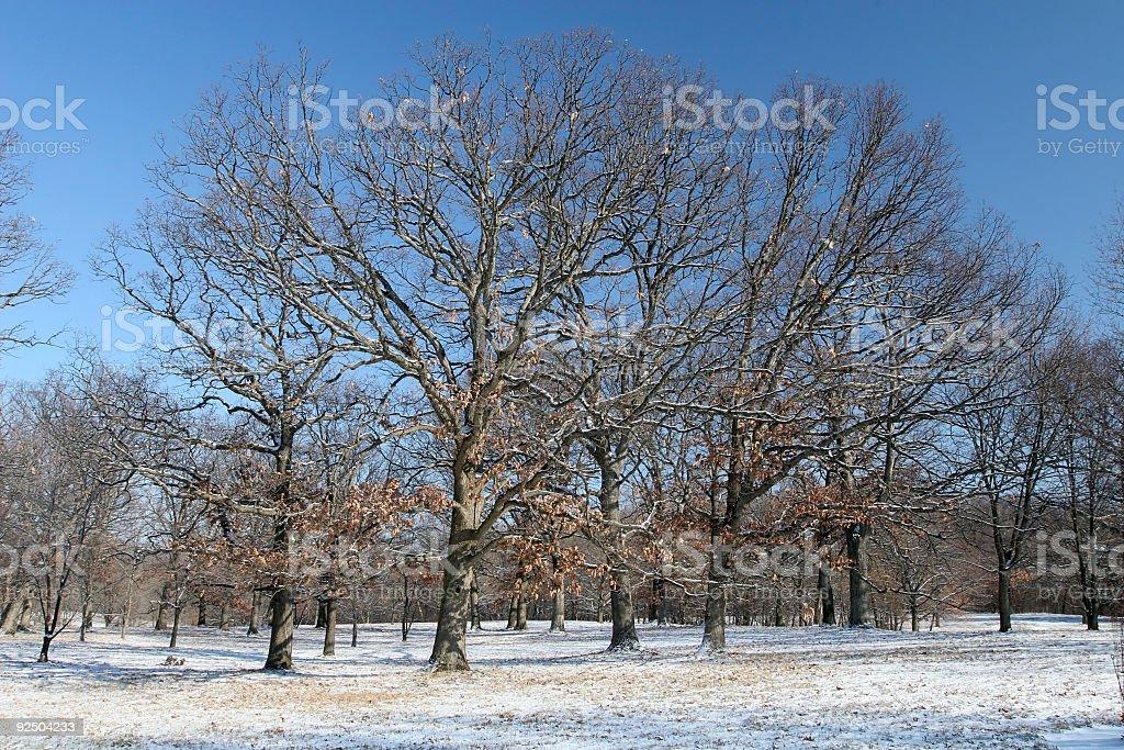 Winter Trees  in Illinois royalty-free stock photo